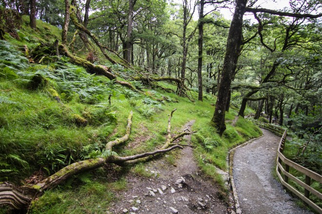 Glendalough walking trail