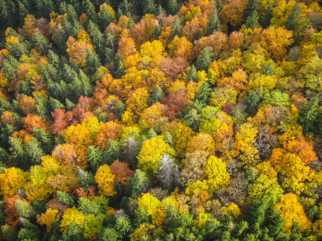 autumn-forest-trees-from-above