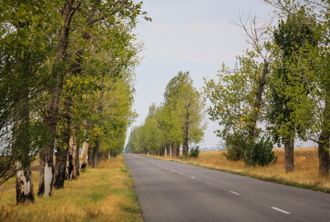 tree-lined-road-in-romania