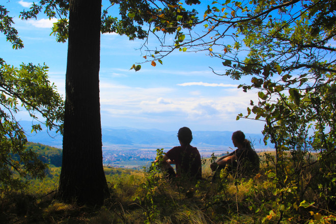 two male hikers looking out over horizon from the shelter of a forest