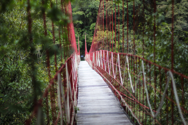 red jungle rope bridge