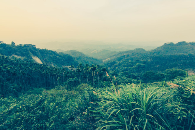 Taiwan jungle mountains